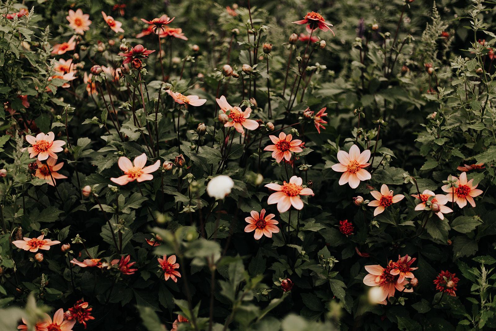 Maries Poppies, fleurs durable, de saison, DR