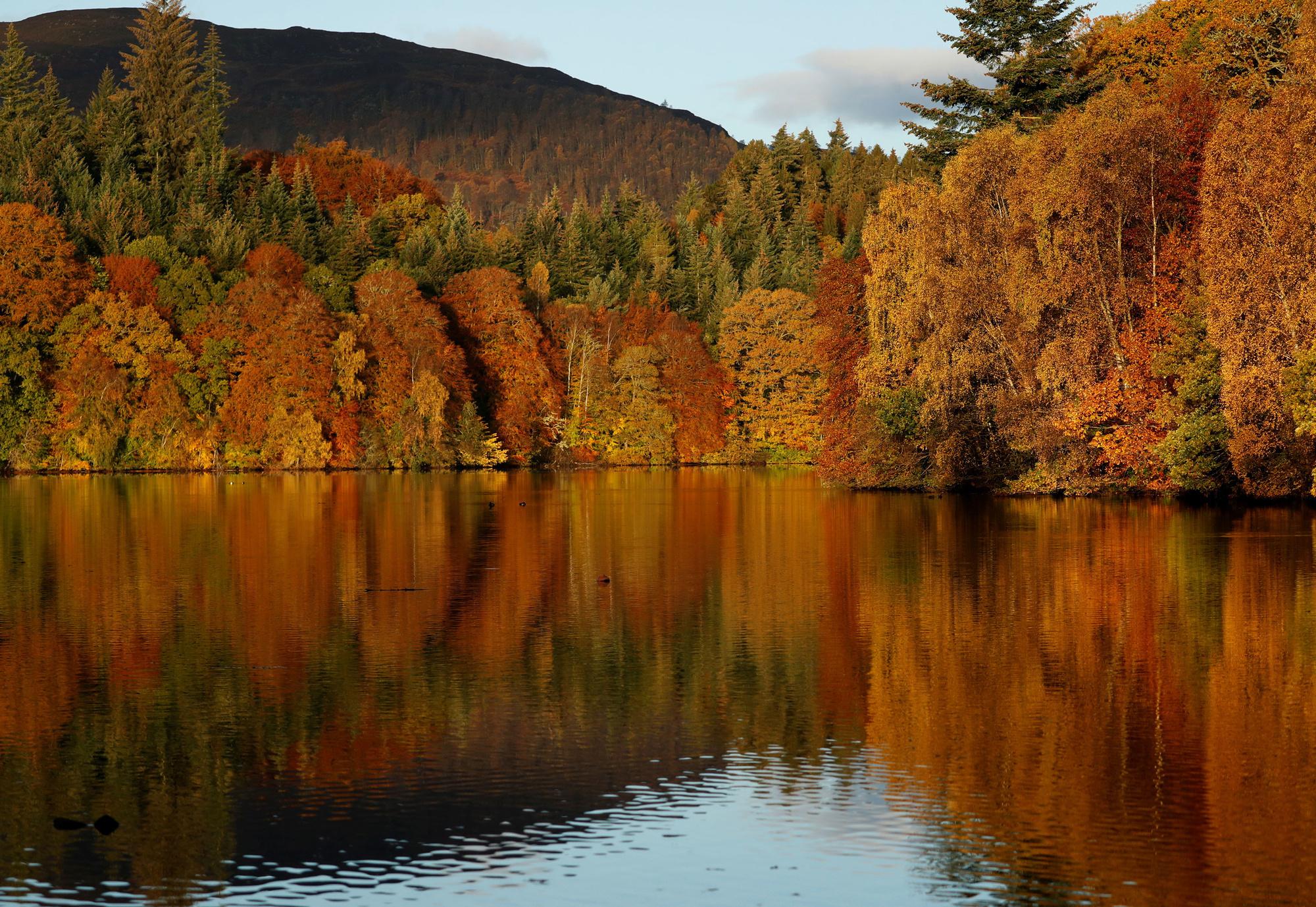 Bossen aan Loch Faskally, Reuters