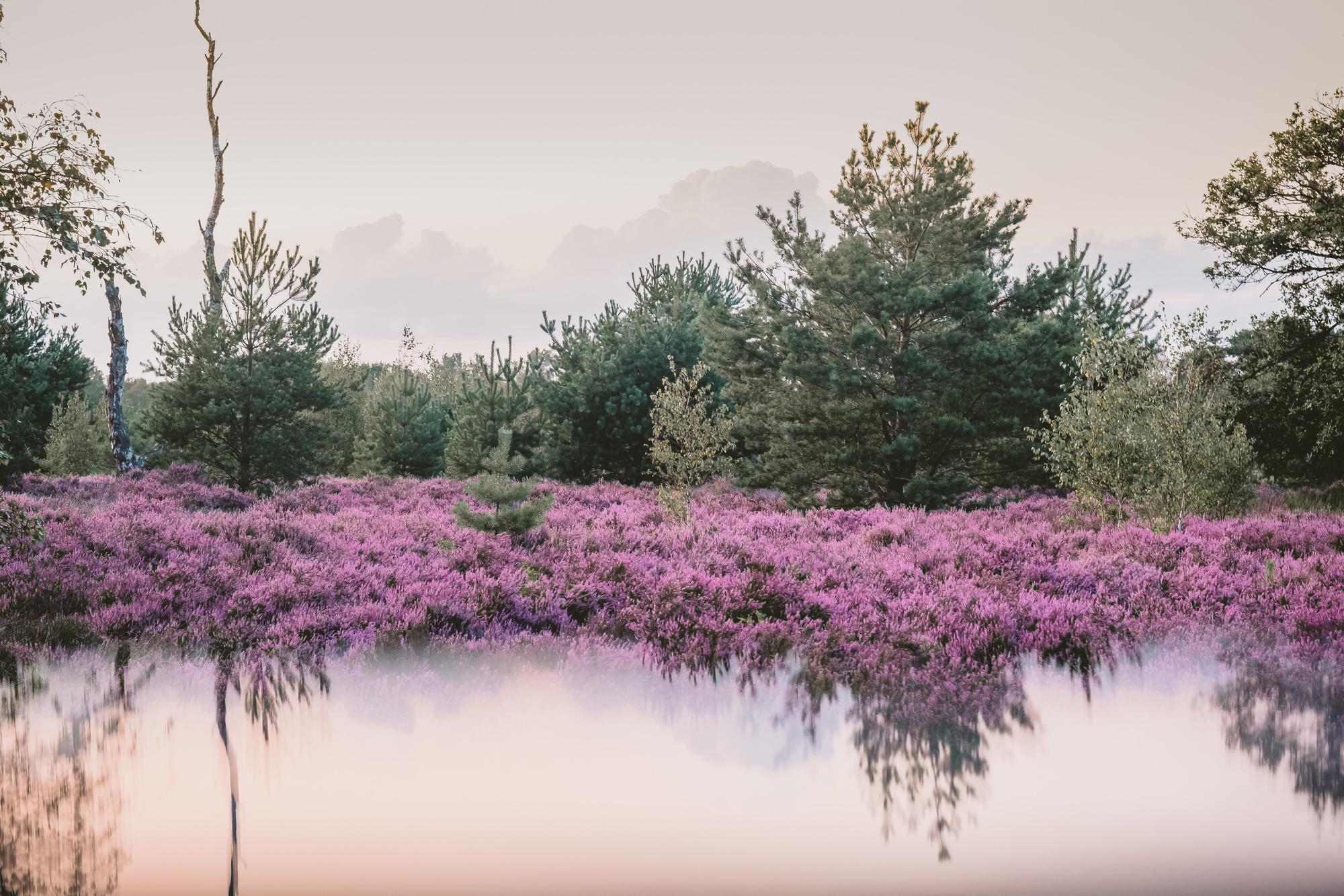 De Groote Heide, Karolien Van Nerum
