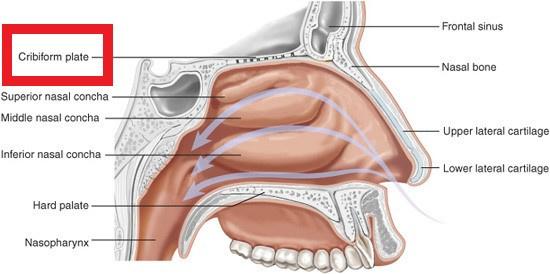 Plastic Surgery Key