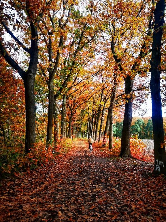 Gestelse dreven in de herfst, VVV Meerhout | Vetexbart